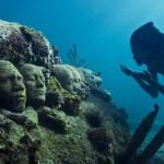 TamCC colonisée par les coraux