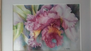 aquarelle cattleya